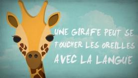 Incroyable Savoir - Les Girafes