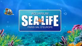 Turtle Fest - L'aquarium Sea Life