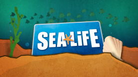 turtle Fest - spot Sea Life 2