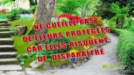 Ne cueille pas de fleurs protégées
