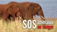 SOS animaux en danger