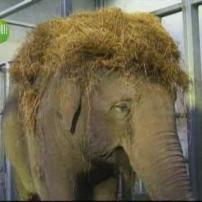 Afro - Elephant