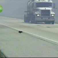 Un lapin sur route !