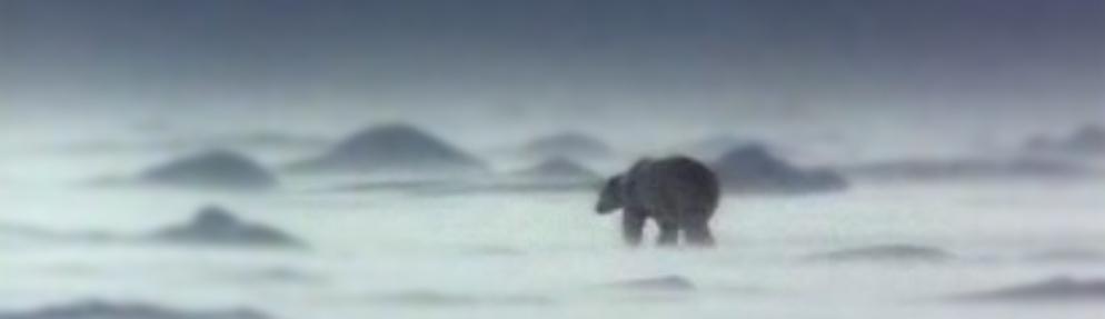 Les petits aventuriers de l'Arctique