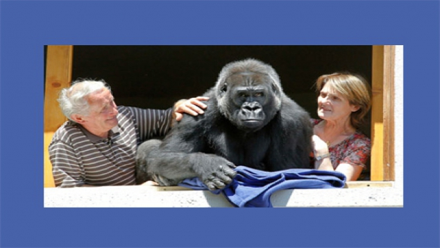 Un gorille dans la famille