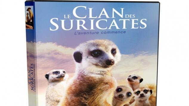 DVD Le clan des Suricates