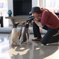 Les pingouins jouent avec M.Popper