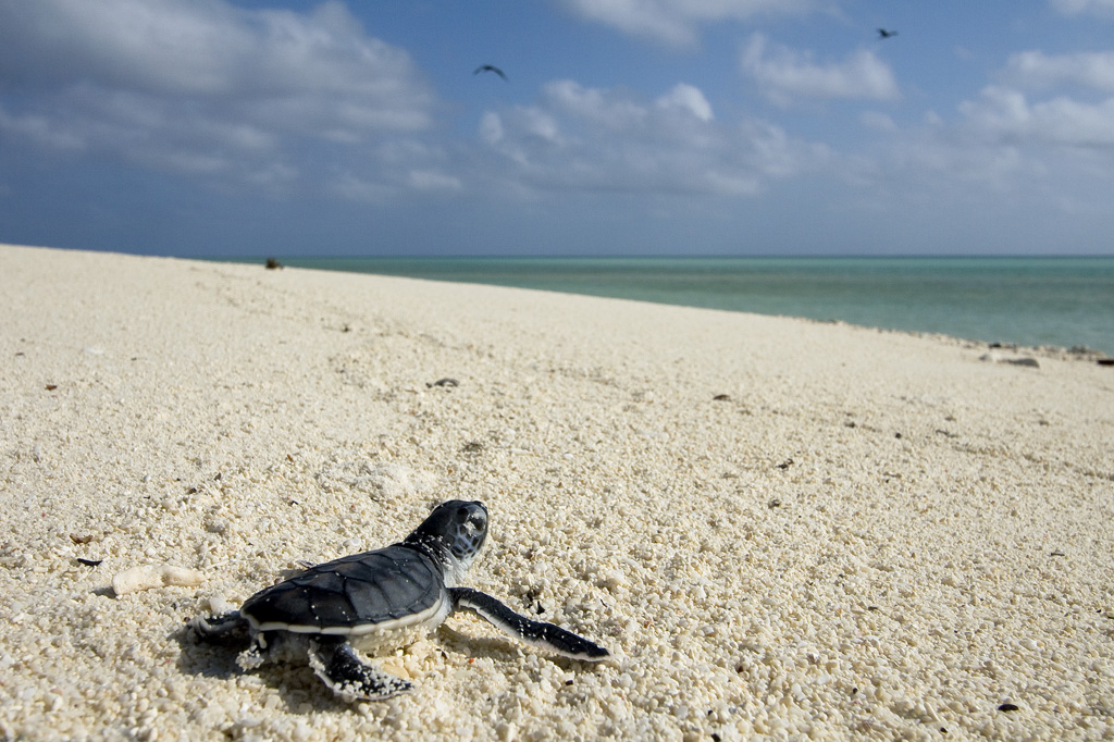 baby turtles on the beach