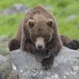 Terre des ours - Après la pêche