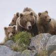 Terre des ours - En famille