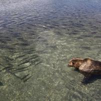 Terre des ours - La pêche