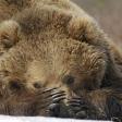 Terre des ours - Petite pause