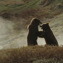 Terre des ours - Qui sera le plus fort ?