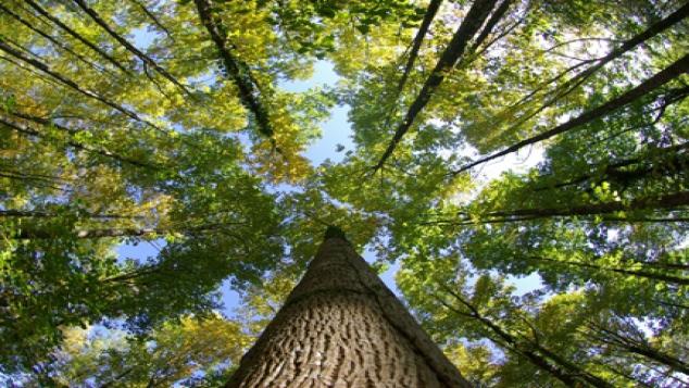 L'ONU proclame 2011 année internationale des forêts