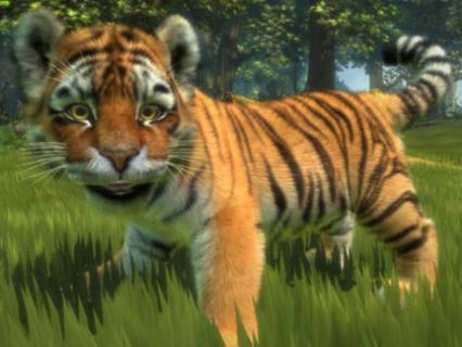 Le bébé tigre