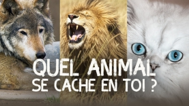Quel animal se cache en toi ?
