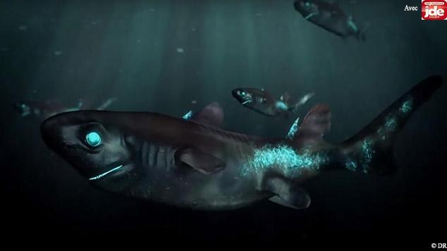 requin ninja