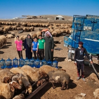 Le bétail la nuit de l'eau de l'Unicef 2016