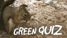 green quiz