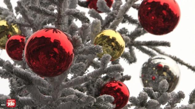 JDE - Journal des enfants - L'actu de la semaine - Noël : et si on adoptait un sapin ?
