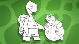 Turtle Fest - Activités