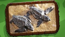 Turtle Fest - Images