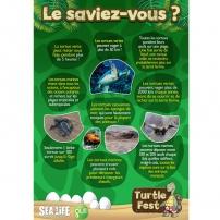 Turtle Fest - Le savais-tu ?