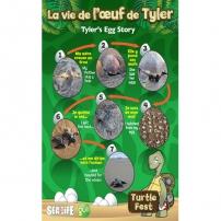 Turtle Fest - Les œufs de tortue