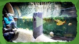 Turtle Fest - Vidéos
