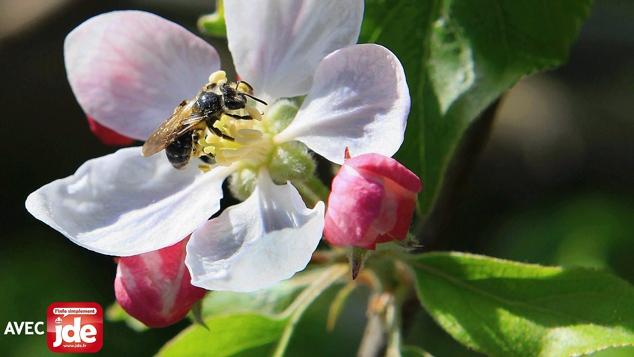 Urgence : il faut protéger les abeilles