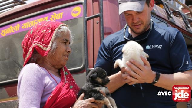 Au secours des animaux après le tremblement de terre au Népal