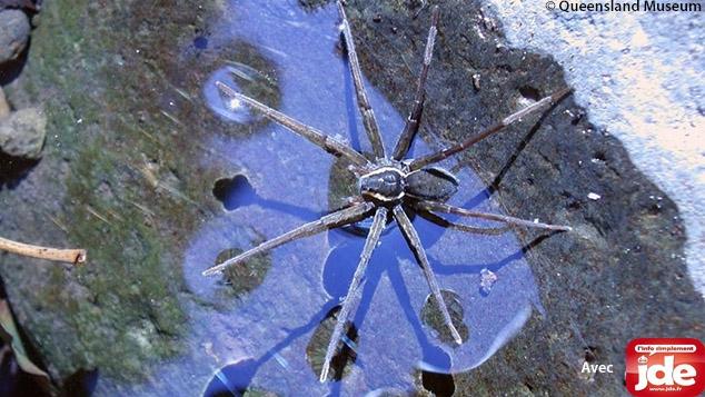 De nouvelles espèces étonnantes à découvrir !