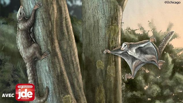 Des animaux planaient au-dessus des dinosaures !