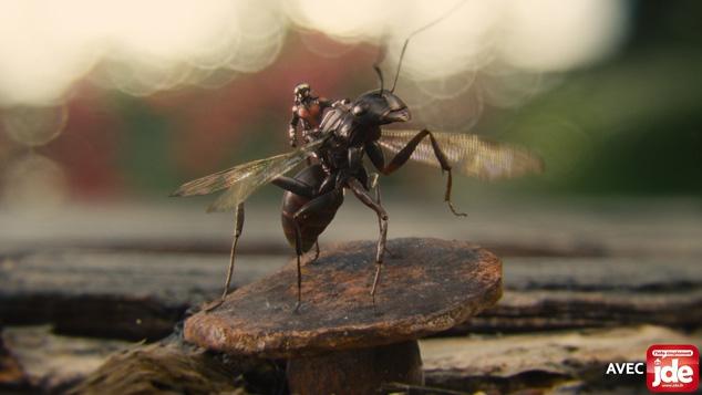 Les super-pouvoirs des insectes