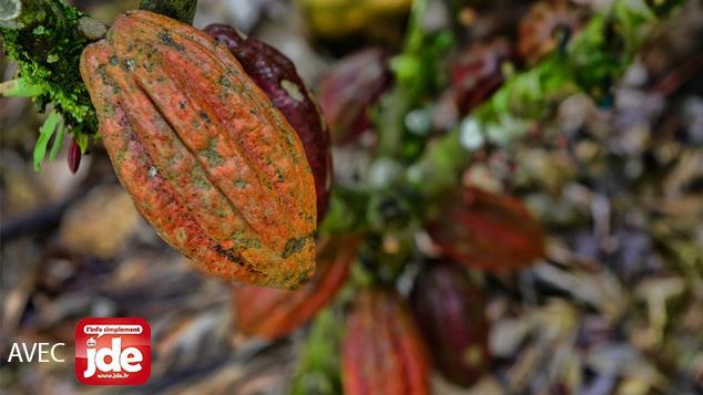 la production mondiale de cacao est en baisse