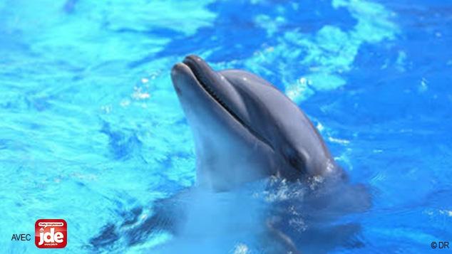 Quel avenir pour les parcs aquatiques ?