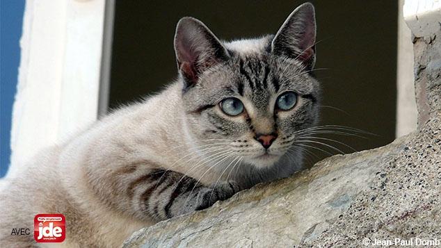 Savez-vous d'où viennent les chats ?
