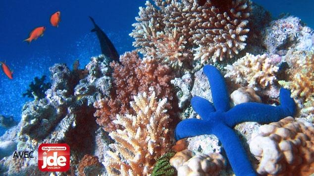 Tara au chevet du corail