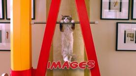 Les Images de Ma vie de chat