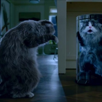 Ma vie de chat - Monsieur Fuzzypants