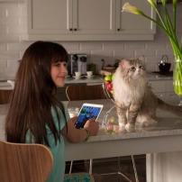 Ma vie de chat - Rebecca Brand