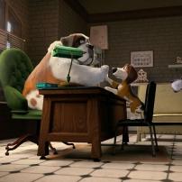 Ozzy dans le bureau du directeur