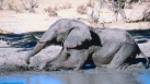 Documentaire sur les éléphants