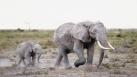 Documentaire sur la famille éléphant