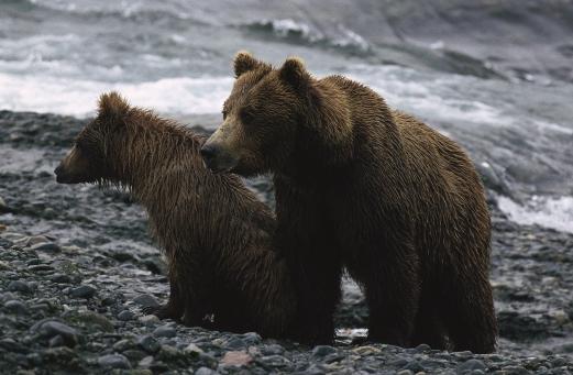 Documentaire sur les ours