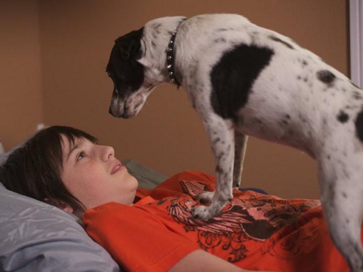le chien vampire en streaming. Black Bedroom Furniture Sets. Home Design Ideas